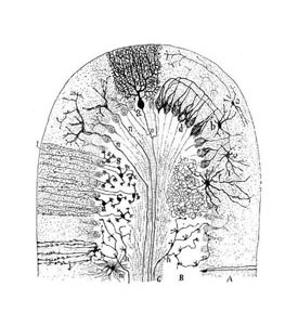 A piece of art depicting Cajal's neuron, part of the Neurology, Illustrated exhibition at Tufts Medical Center in Boston.
