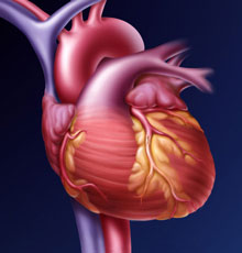 A scientific image of a heart.