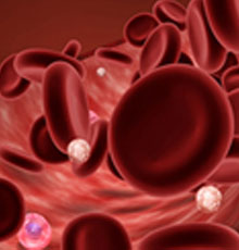Blood cells in the body