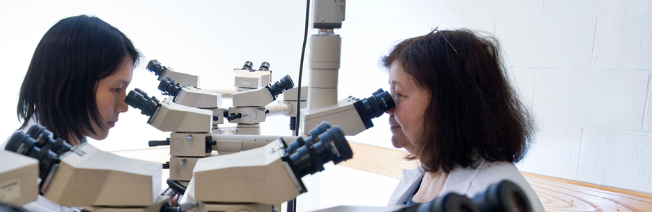 A researcher in the Division of Endocrinology at Tufts Medical Center uses a microscope.